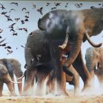 Притча дня. Укрощение слонов