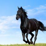 Притча дня. Хорошая лошадь