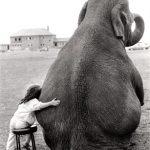 Притча дня. «Я люблю слона»